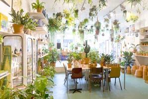 Un blog para fans de las plantas