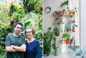 Básicos para Vivir bien en casa: Plantas adentro y El descanso