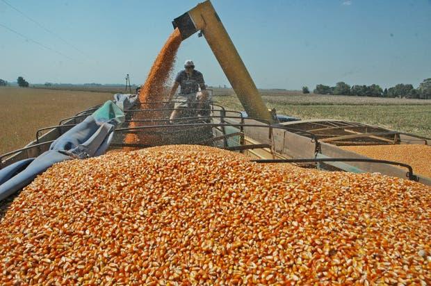 Ven una oportunidad para el maíz argentino en México