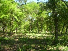 La Nación avalaría un nuevo ordenamiento de los bosques nativos en Córdoba