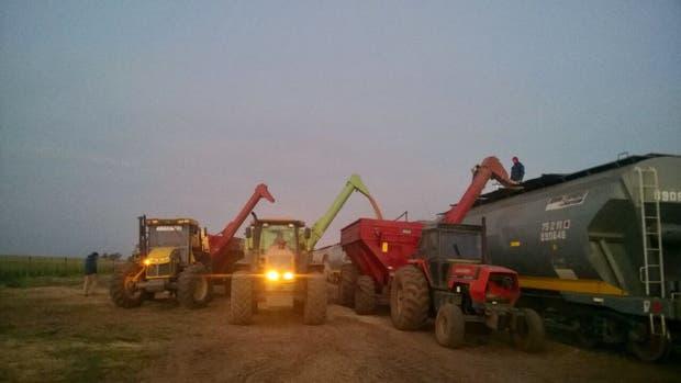 La carga de la cosecha en el tren en un campo de La Pampa