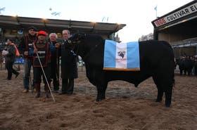 El Gran Campeón Macho Brangus, box 1325, de La Bellaca (Gervasio Zuza SRL) y La Unión del Norte