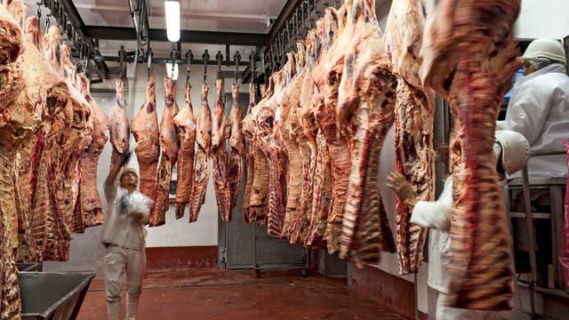La faena se realiza cuando el ganado wagyu alcanza el punto justo de grasa intramuscular