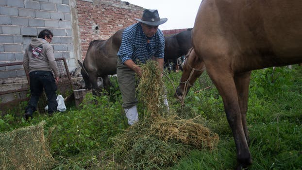 Un jinete alienta a los animales. Foto: LA NACION / Diego Lima