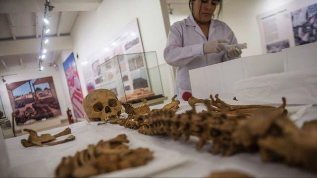 En el caso de los humanos, se trata de restos de personas de entre 20 y 40 años de edad