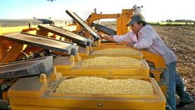 La cosecha de soja por estos días tiene prioridad casi exclusiva