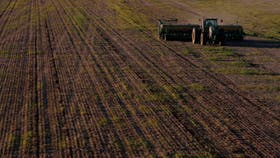 Bajan la estimación del área sembrada de trigo