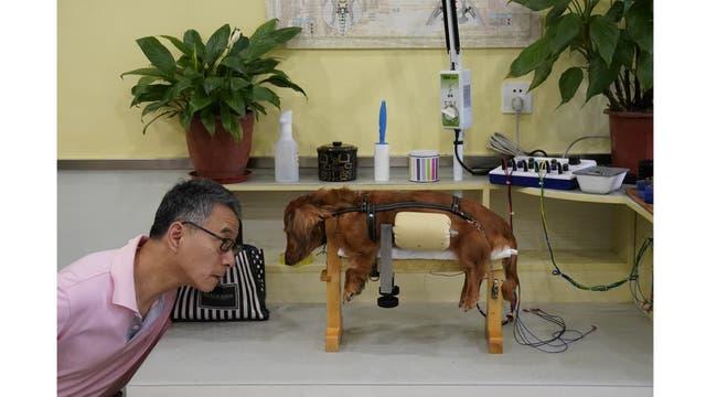 Un perro junto a su dueño recibe tratamiento
