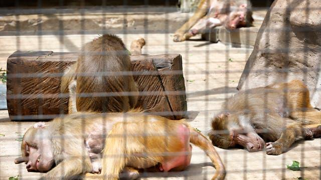 Una siesta al sol en el sector de los primates. Foto: LA NACION / Fernando Gutierrez