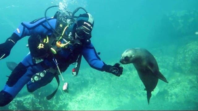 """Rescate en la profundidad. Dolores Elkin, arqueóloga submarina, rescata de naufragios valiosos objetos que se exponen en museos del Sur. """"El mar es el museo más rico del mundo, por todo lo que esconde"""", dice"""