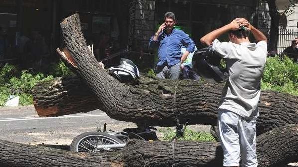 San Cristobal:una persona murió tras ser aplastada por un árbol