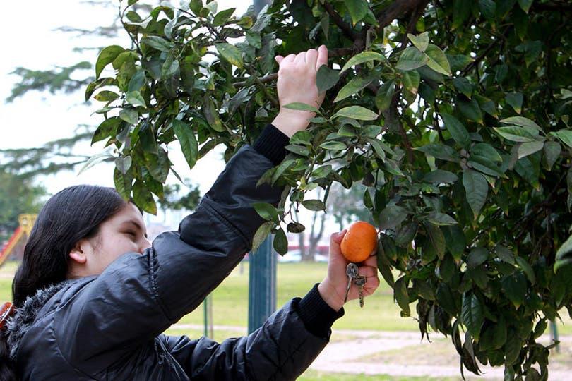 Las naranjas del Parque Thays, al alcance de todos
