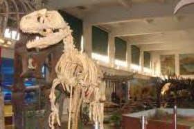 El museo de Ciencias Naturales Bernardino Rivadavia, un lugar de ciencia en la ciudad de Buenos Aires