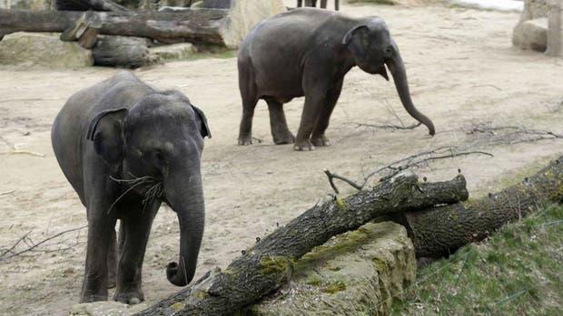 Dos elefantes en Mendoza serán trasladados a un santuario en Brasil