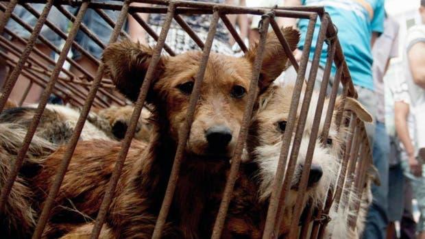Perros en el festival de Yulin, China