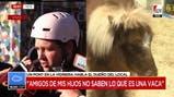 Polémica en Palermo: un local de muebles exhibió un pony en su vidriera