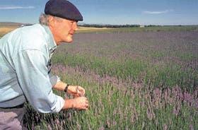 El productor Bertrand Laxague observa un campo saturado por el aroma y el color de la lavanda