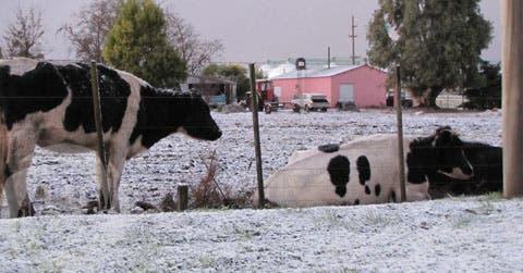 Nevada en Tres Arroyos. Foto: Gentileza Dolores Zancaner