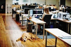 Pet office: los beneficios de traer a las mascotas al trabajo