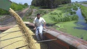 La cosecha se realiza en medio de dificultades para sacar la producción