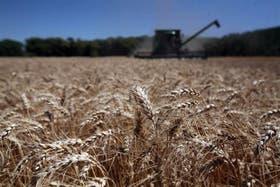 La industria molinera apunta a exportar un millón de toneladas de trigo este año a mercados de la región