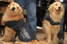 Perros entrenados para detectar divisas