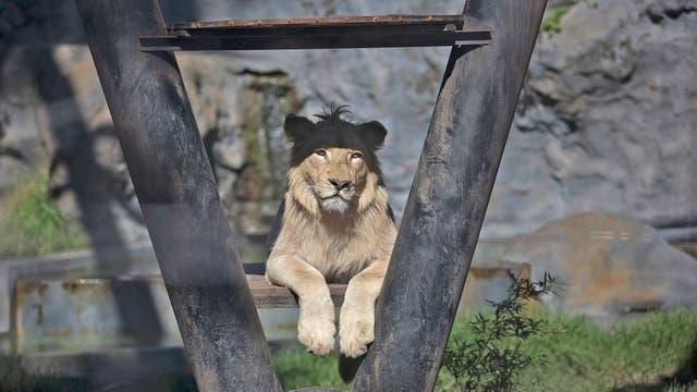 En forma paralela continuará la derivación de animales a santuarios y reservas para liberarlos del cautiverio
