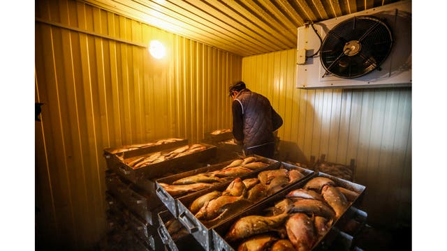 Galymzhan trabaja en una fábrica, clasificando peces en la aldea de Bogen