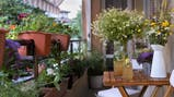 Fotos de Jardinería