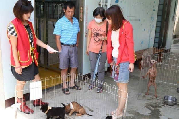 En Taiwán hay muchos perros que esperan por ser adoptados