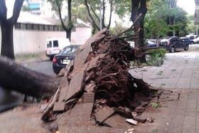 En la calle Gabriela Mistral entre Chivilcoy y Mercedes, en Villa Devoto, un árbol no resistió el viento y cayó