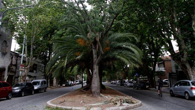 El bulevar de la avenida Chivilcoy, con frondosos y variados árboles. Foto: LA NACION / Hernán Zenteno