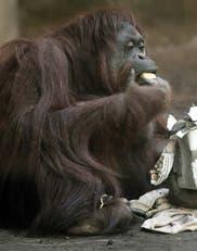 Zoológicos sin sentido