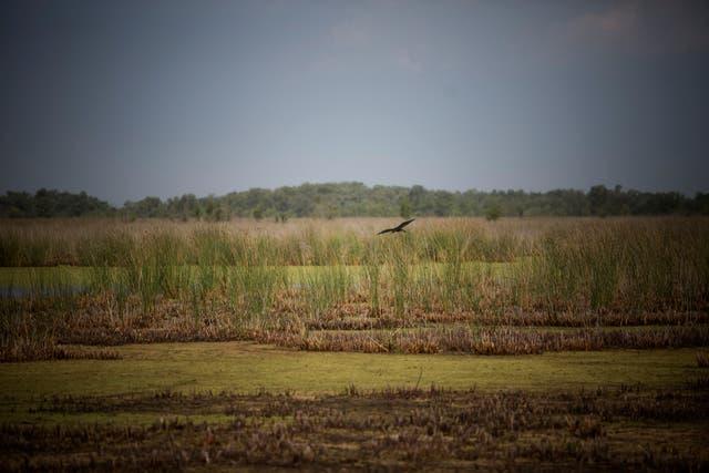 Será un oasis verde, un territorio bastante virgen, un refugio para 309 especies de aves y 49 de mamíferos, un sitio que ayudará a evitar inundaciones