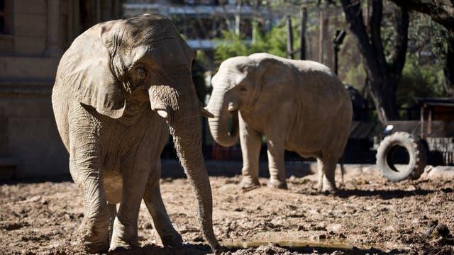 Algunos animales serán trasladados a reservas en EE.UU.