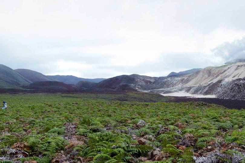 Las imágenes recabadas en marzo por científicos de la Fundación Charles Darwin y del Parque Nacional Galápagos, ya pueden verse en Google Street View. Foto: Google