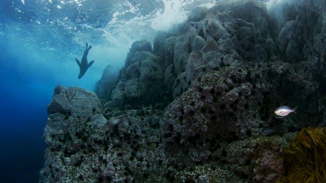 Se protegerán más de 300.000 kilómetros cuadrados pobladas por especies únicas