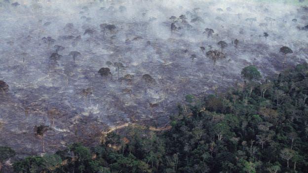 El Fondo Mundial para la Naturaleza señala que aproximadamente el 17% del bosque amazónico se ha perdido en los últimos 50 años