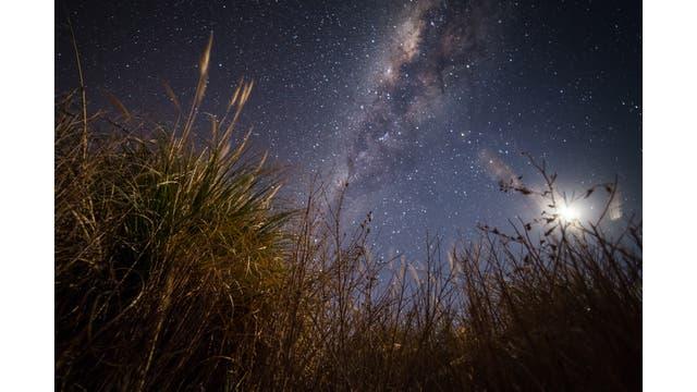 Planta comúnmente llamada cola de zorro, habitante de las zonas semidesérticas del norte de Chile, a la luz de la luna creciente
