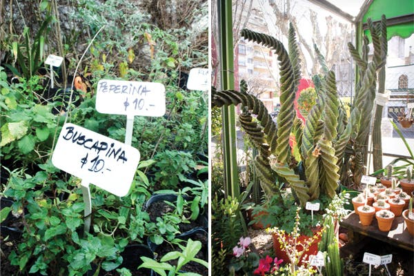 Arriba la primavera viveros cool revista ohlal for Vivero agronomia