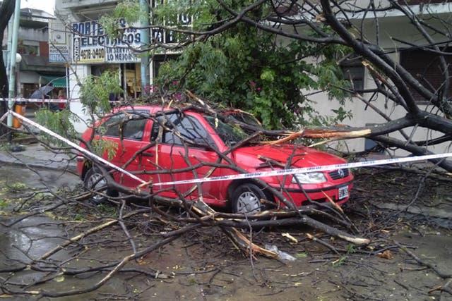 En Villa Luro, un árbol aplastó un auto
