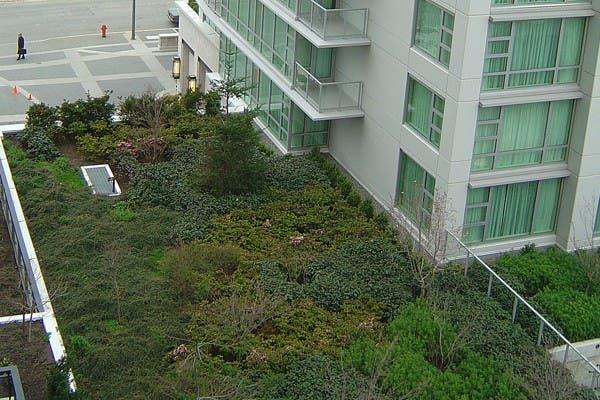 Un ejemplo de techo verde instalado en el hotel Marriott Hotel de Victoria, Canadá