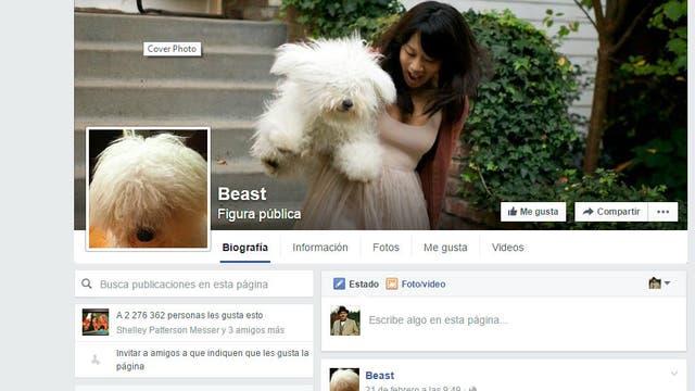 Beast, el perro del CEO de Facebook tiene su perfil en la red social del amo