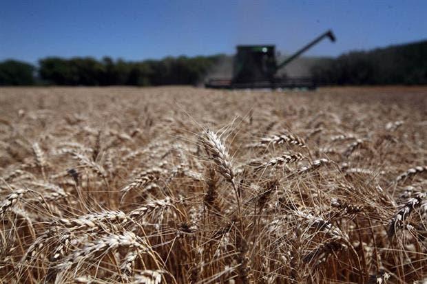 Recomiendan cómo manejar la comercialización del cereal