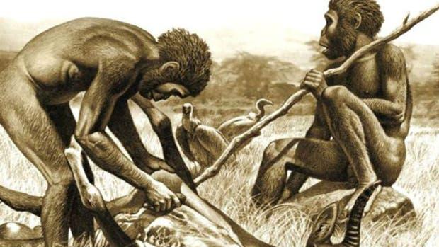 el consumo de carne y el desarrollo de herramientas, y no la capacidad de cocinar, fueron las razones que desencadenaron que los primeros humanos desarrollaran mandíbulas más pequeñas