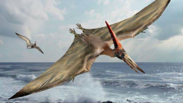 El pterosaurio hallado en Chubut voló hace cientos 170 millones de años por nuestra Patagonia