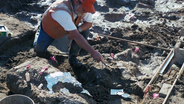 El paleontólogo Don Swanson apuntando al fragmento de roca cerca de un gran fragmento horizontal de colmillo de mastodonte.. Foto: AFP / San Diego Natural History Museum