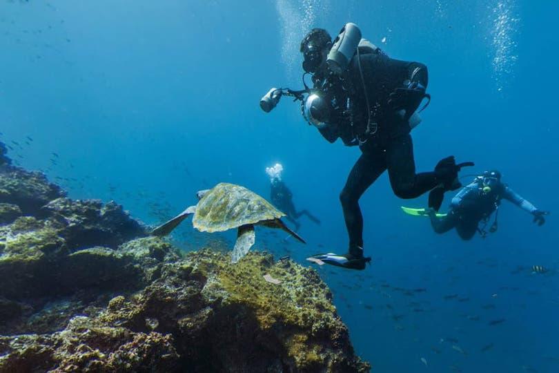 Las innumerables fotos que se pueden ver fueron tomadas por expertos que han recorrido el mundo con el fin de retratarlo. Los expedicionarios debieron nadar con los animales para poder captarlos bajo el agua. Foto: Google