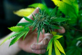 El estado de Colorado, en Estados Unidos, legalizó la venta de marihuana para los mayores de 21 años