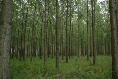 Buscan incrementar la superficie cultivada para forestación